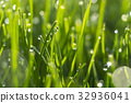 Dew drops on bright green grass with sun flare 32936041