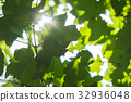 Fresh young green foliage bright sun light, close 32936048