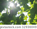 Fresh young green foliage bright sun light, close 32936049