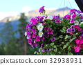 petunia, bloom, blossom 32938931