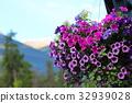 petunia, bloom, blossom 32939028