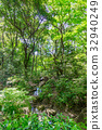 ป่า,ป่าไม้,ไม้ 32940249