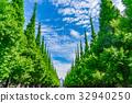 풍경, 식물, 가로수 32940250