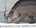动物 东山动植物园 哺乳动物 32942159