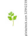Green coriander isolation on a white background. 32942239
