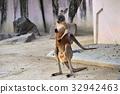 動物 東山動植物園 哺乳動物 32942463