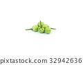 turkey berry (Solanum torvum) isolated on white  32942636