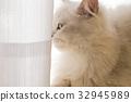 毛孩 貓 貓咪 32945989
