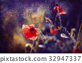 Red Poppy on Violet tone background with bokeh 32947337