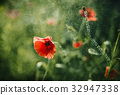 Red Poppy on Green background with bokeh 32947338