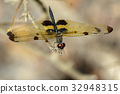 Image of a rhyothemis phyllis dragonflies. 32948315
