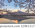 Mt. Fuji and Cherry Blossoms 32961317