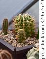 cactus desert plant 32962629