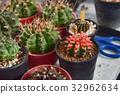 cactus desert plant 32962634