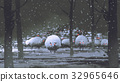 flock of demon sheep in winter landscape 32965646