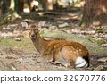 Deer lying down on the ground 32970776