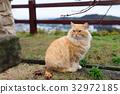 Cute Street cat at park 32972185