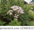 粉色 花朵 花卉 32980913