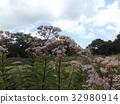 粉色 花朵 花 32980914
