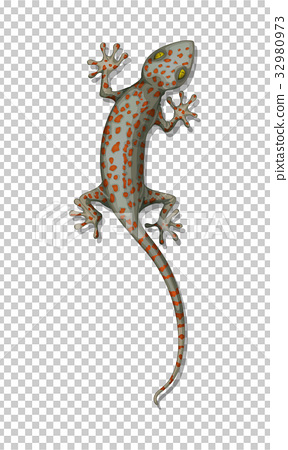 Lizard on the wall 32980973
