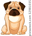 Little pug dog sitting on white background 32981035