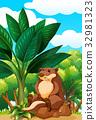 Beaver sitting on rock 32981323