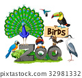 Different kinds of birds in the zoo 32981332