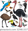Different types of wild birds 32981337