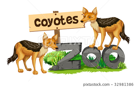 Coyotes on the zoo sign 32981386