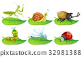 Different types of bugs on green leaves 32981388
