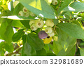 블루 베리 열매 32981689