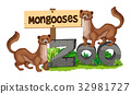 Mongooses standing on zoo sign 32981727