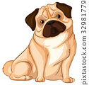 Little pug dog on white background 32981779