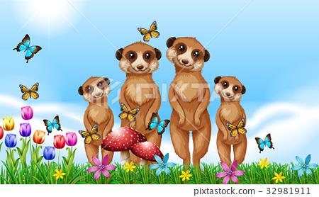 Four meerkats in the garden 32981911