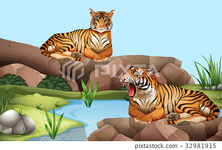 Two tigers by the pond 32981915