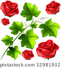 Green leaves and red roses 32981932