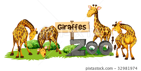 Four giraffes in the zoo 32981974