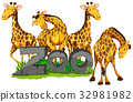 Four giraffes in the zoo 32981982