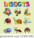 Different types of insects 32981985