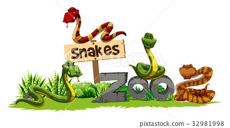 Four snakes in the zoo 32981998