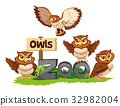 Four owls in the zoo 32982004