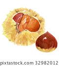 chestnut, chestnuts, japanese chestnut 32982012