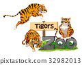 Three tigers in the zoo 32982013