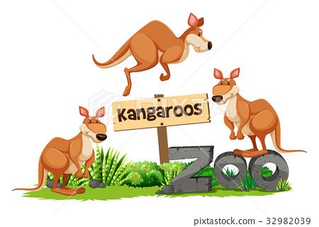 Three kangaroos at the zoo sign 32982039
