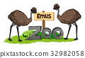 Two emus in the zoo 32982058