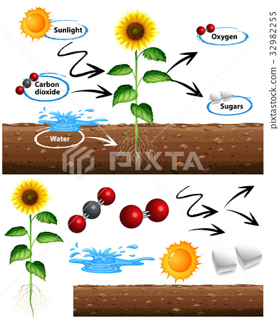 Diagram showing how plant grows 32982255