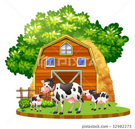 Cows live on the farmyard 32982273
