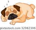Little dog sleeping on white background 32982306