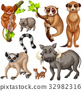 types of wild animals on white background 32982316