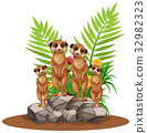 nature, mammal, meerkat 32982323
